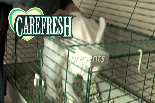 RABBIT - Carefresh Happy Habitat - image 1 from the video