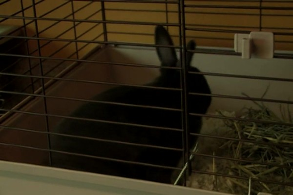 RABBIT - Carefresh Happy Habitat - image 2 from the video