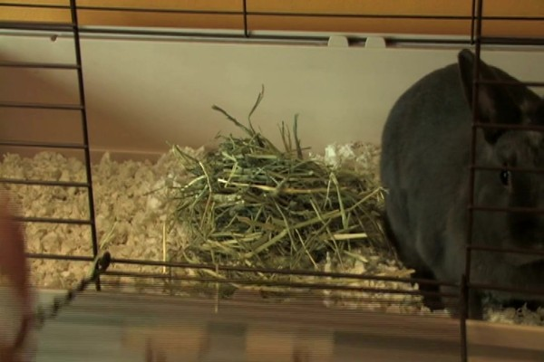 RABBIT - Carefresh Happy Habitat - image 9 from the video