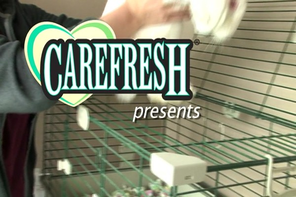 GERBIL - Carefresh happy habitat - image 1 from the video