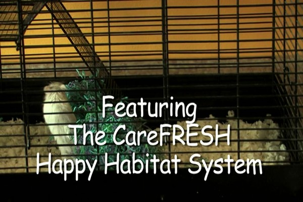 GERBIL - Carefresh happy habitat - image 2 from the video