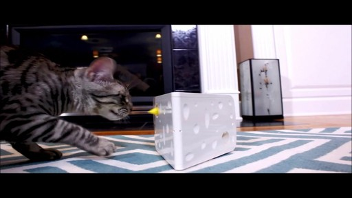 PetSafe Automatic Cheese Cat Toy - image 5 from the video