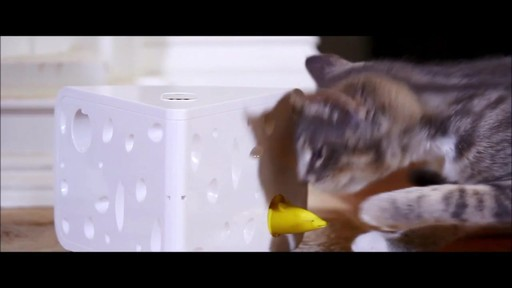PetSafe Automatic Cheese Cat Toy - image 8 from the video