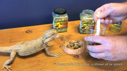 Bearded Dragon Gourmet Food - image 8 from the video