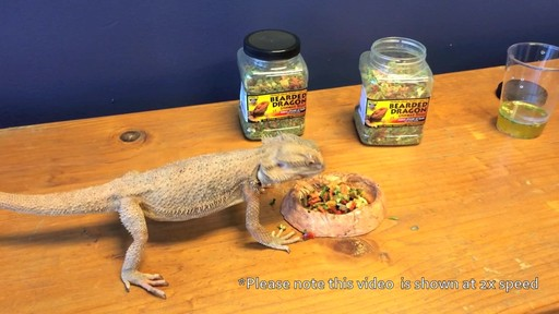 Bearded Dragon Gourmet Food - image 9 from the video