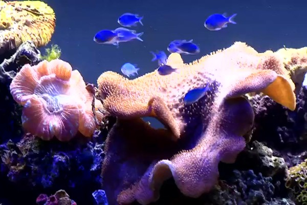 Fluval - led aquarium lighting - image 8 from the video