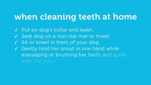 How to Brush Your Dog's Teeth - image 10 from the video
