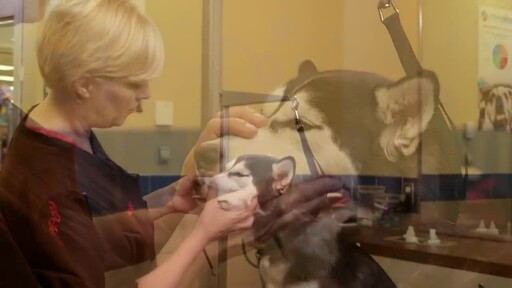 How to Brush Your Dog's Teeth - image 2 from the video