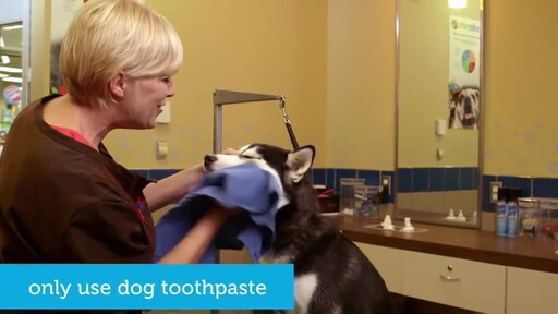 How to Brush Your Dog's Teeth - image 6 from the video