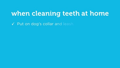 How to Brush Your Dog's Teeth - image 9 from the video