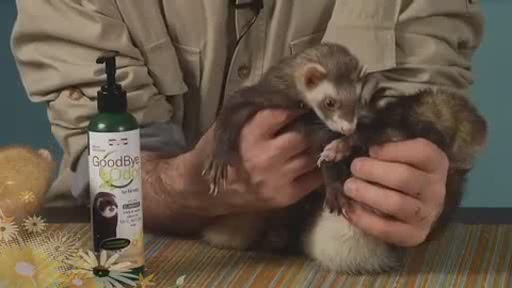 Goodbye Odor by Marshall Pets - image 2 from the video