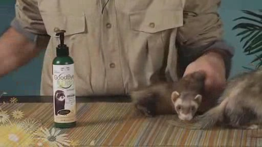 Goodbye Odor by Marshall Pets - image 4 from the video