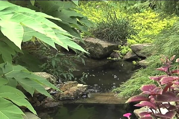 How-to Choose Plants for Your Pond - image 1 from the video