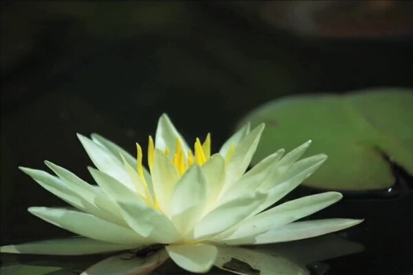 How-to Choose Plants for Your Pond - image 10 from the video