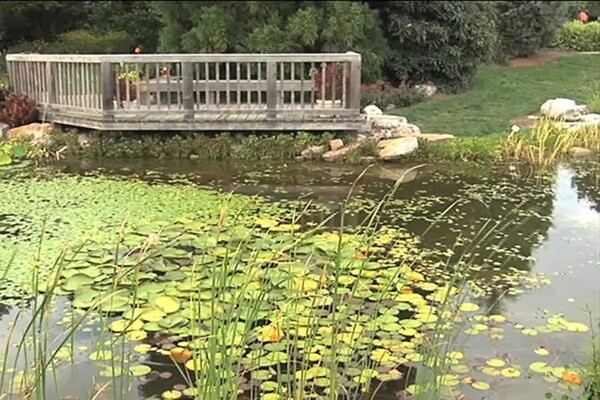 How-to Choose Plants for Your Pond - image 4 from the video