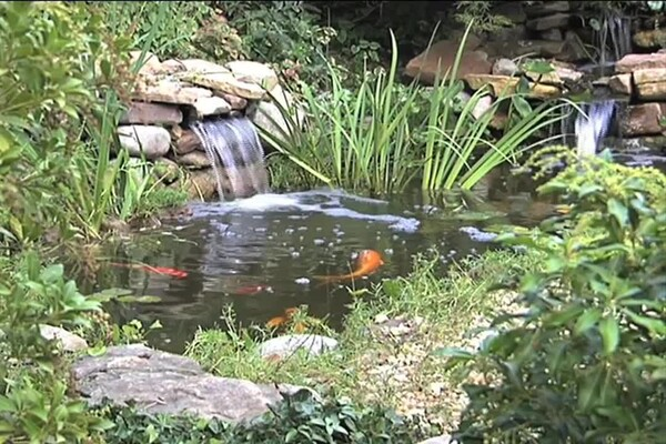 Benefits of Fish in Your Pond - image 6 from the video