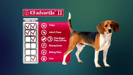 Advantage II and K9 Advantix II for Dogs - image 4 from the video