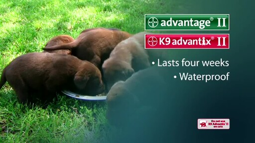 Advantage II and K9 Advantix II for Dogs - image 8 from the video