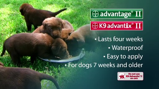Advantage II and K9 Advantix II for Dogs - image 9 from the video