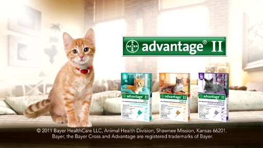 Advantage II for Cats - image 10 from the video