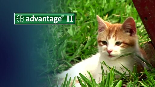 Advantage II for Cats - image 7 from the video