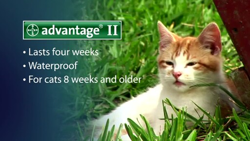 Advantage II for Cats - image 8 from the video