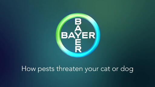 How Pests Threaten Your Dog or Cat - image 1 from the video