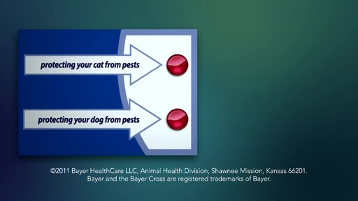 How Pests Threaten Your Dog or Cat - image 10 from the video