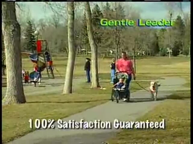 Gentle Leader - image 3 from the video