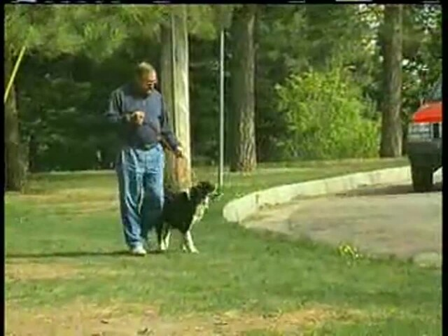 Gentle Leader - image 5 from the video