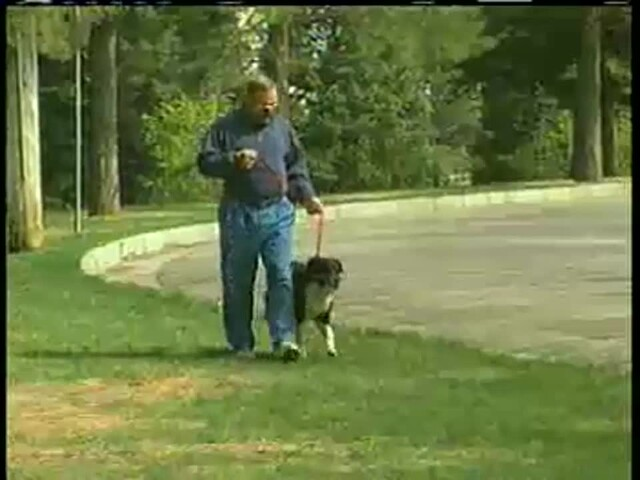 Gentle Leader - image 7 from the video