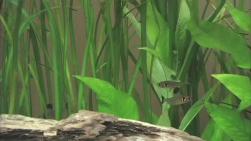 Aqueon QuietFlow Aquarium Power Filters - image 1 from the video