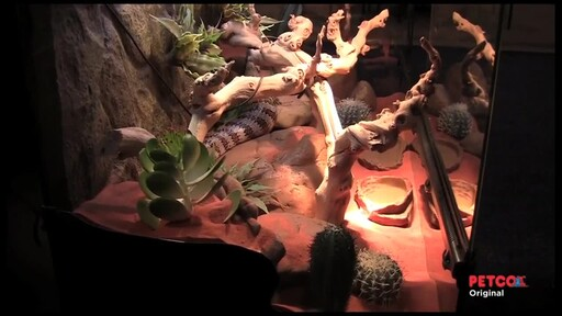 How-to Set Up a Desert Terrarium - image 10 from the video