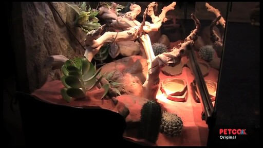 How-to Set Up a Desert Terrarium - image 9 from the video