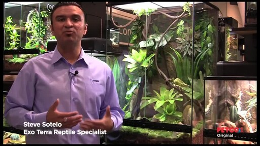 How-to Set Up a Rainforest Terrarium - image 1 from the video