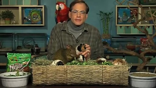 Guinea Pigs - image 1 from the video