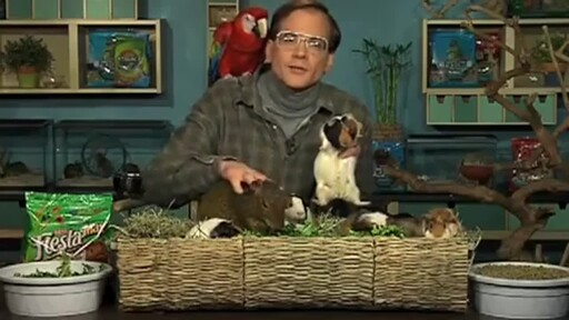 Guinea Pigs - image 3 from the video