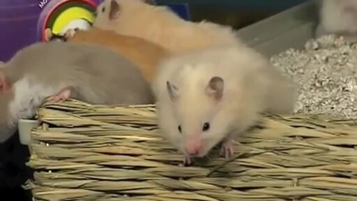 Hamsters - image 10 from the video