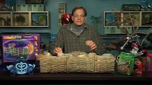 Hamsters - image 2 from the video