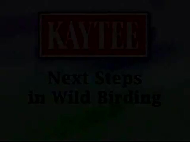 Next Steps in Wild Birding - image 1 from the video