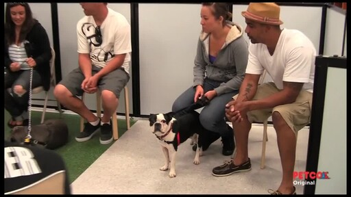 PETCO Dog Training Class Overview - image 1 from the video