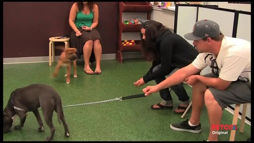 PETCO Dog Training Class Overview - image 5 from the video