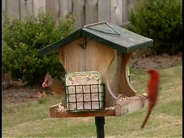 Getting Started in Wild Birding - image 8 from the video