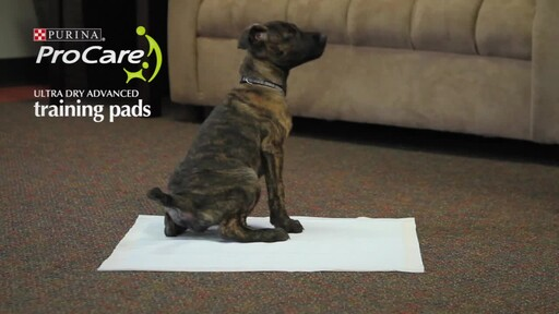 Purina ProCare Ultra Dry Advanced Dog Training Pads - image 10 from the video
