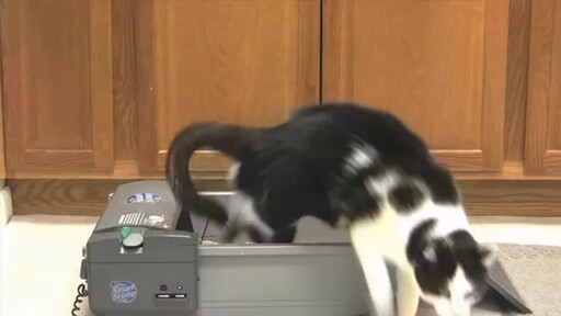 SmartScoop Self-Scooping Cat Litter Box - image 3 from the video