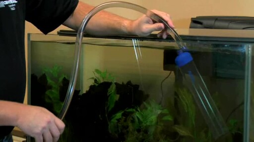 How to clean a dirty fish tank in your home cleaning for How to clean fish tank rocks