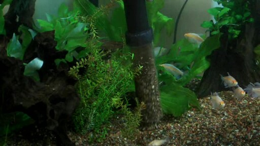 Aqueon Aquarium Water Changer - image 6 from the video