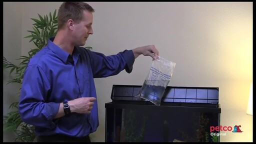 How-to Set Up a Freshwater Aquarium - image 10 from the video
