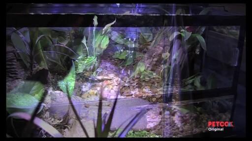 Tetra Viquarium - image 3 from the video