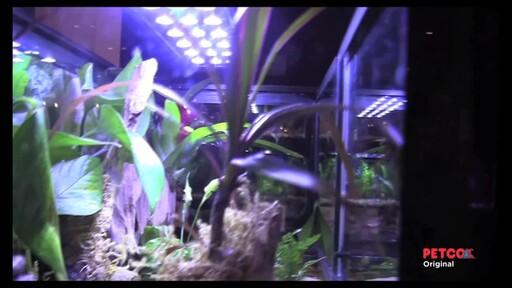 Tetra Viquarium - image 4 from the video
